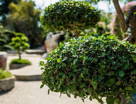 Luxury landscape design of the tropical garden. Stock Photo