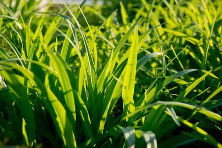 The grass in the sunlight. Light summer background. Stock fotó