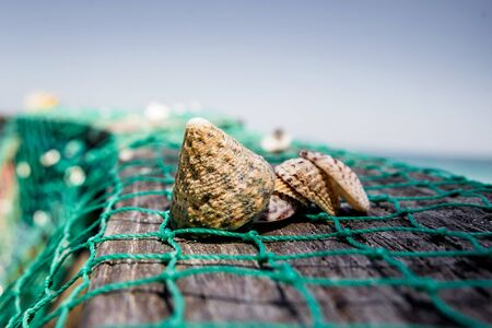 Sea shells with fishing net and hat.