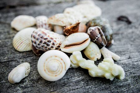 Sea shells with fishing net. Sea background Фото со стока