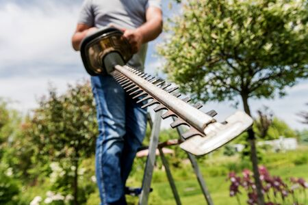 A gardener trimming trees with hedge trimmer. Landscape design. Gardening