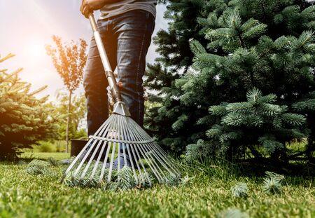 Gardener raking cutting leaves in the garden. Landscape design. Gardening