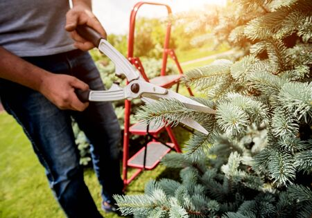 Professional gardener pruning a tree with garden scissors. Landscape design. Gardening Stockfoto - 150296490