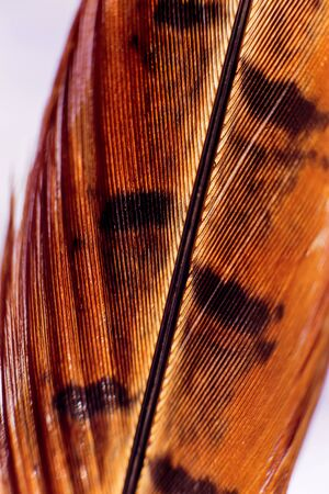 Feather birds close-up. Macro photography. Beautiful background