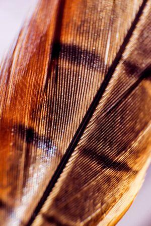 Feather birds close-up. Macro photography. Beautiful background.
