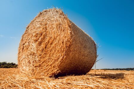 Straw bales at the wheat field. Summer background