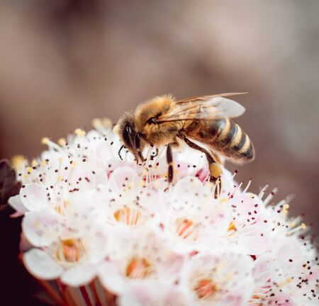 A bee on a flower. Macro. Background