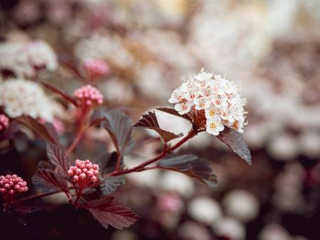 A bee on a flower. Macro. Background. Standard-Bild