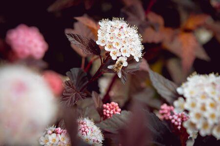 A bee on a flower. Macro. Background. Reklamní fotografie