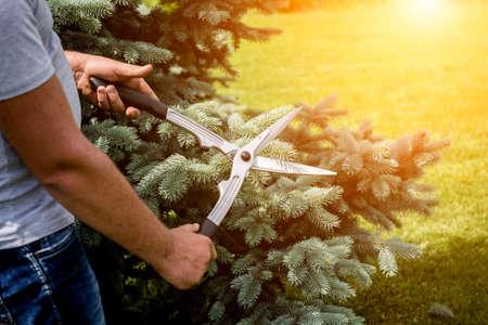 Professional gardener pruning a tree with garden scissors