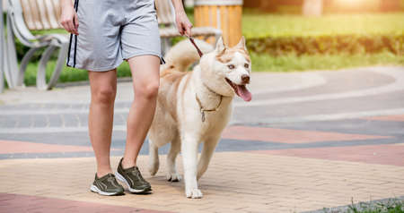 Owner walking with husky dog at the park.