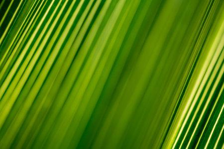 Beautiful exotic pattern of green tropical palm leaves Standard-Bild