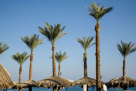 A view of a beach with palm trees