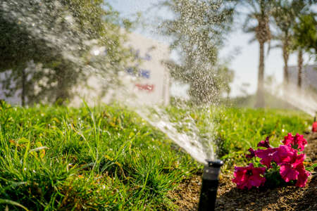Automatic sprinkler watering system in the garden