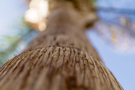 Beautiful texture of the big coconut palm trunk Standard-Bild