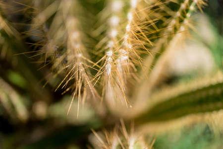 Beautiful texture of big green leaf exotic cactus