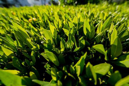 Green leafs on blurred background in garden Standard-Bild