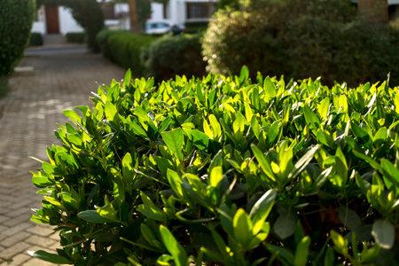 Luxury landscape design of the tropical summer garden Standard-Bild