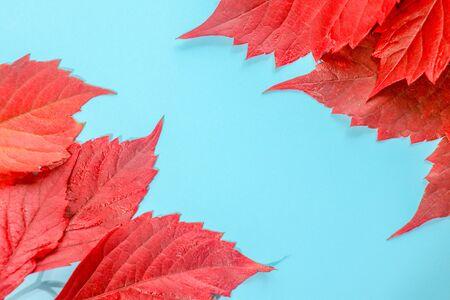 foglie cadute colorate autunnali sull'erba verde