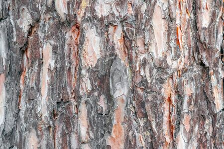 the bark of an old tree as a background close up