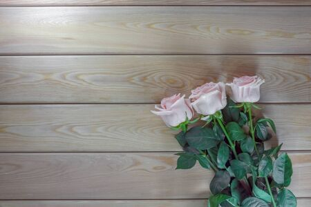 pink roses on a wooden background isolate . High quality photo Фото со стока