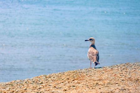 A lone white gull on the coastal sand