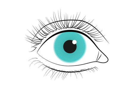 Human eye icon. Black line vector eye illustration isolated on white background