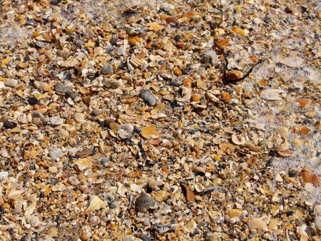 Pile of seashells of different shapes and colors washed up on St. George Island, Florida, some crushed. Scene includes foam and a piece of seaweed. Stock Photo