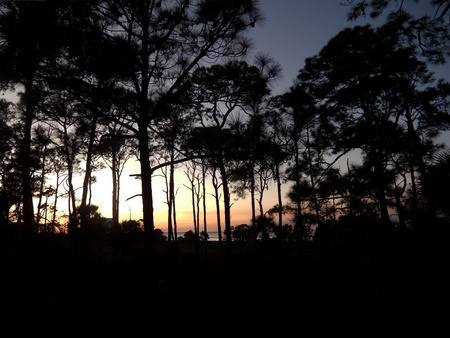 Silhouetted pine trees near Apalachicola Bay at sunset on St. George Island, Florida. Stock Photo