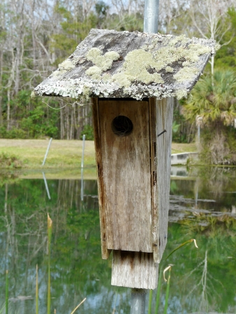 A birdhouse on the bank of a pond in a Florida park has moss and lichens growing on the roof. Stock Photo - 17974314