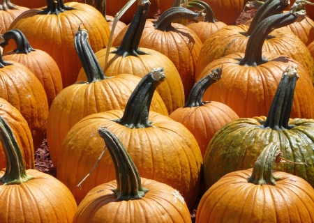 Close-up of pumpkins for sale. Some have a number indicating their weight.