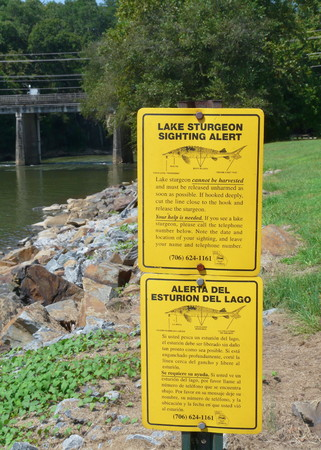 Lake sturgeon are being reintroduced to the Coosa River Basin  This Georgia Department of Natural Resources sign is at Carter Lake  Stock Photo