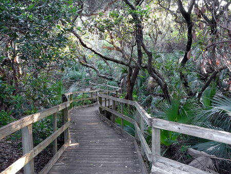 Maritime hammock nature trail, early morning at Lori Wilson Park in Cocoa Beach, Florida, part of the Great Florida Birding Trail