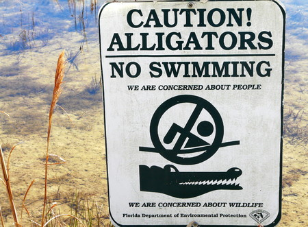 no swimming: No swimming sign at Fort Cooper State Park, Florida, warning of alligators in the lake.