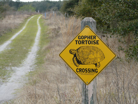 A trail sign in a central Florida park signifies efforts to protect the gopher tortoise, an endangered tortoise of the southeastern United States.
