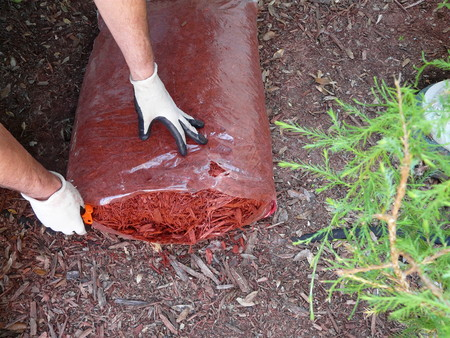 A man prepares to mulch a flower garden to conserve moisture, control weeds, and insulate plants. Wearing gloves, hes opening a bag of cypress mulch.
