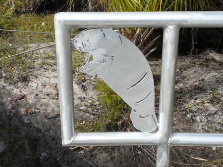 CRYSTAL RIVER, FLORIDA-JANUARY 15, 2017: Gate is open at Three Sisters Springs during the Manatee Festival. The Crystal River National Wildlife Refuge is home to the endangered West Indian manatee.