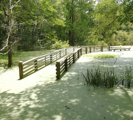 This flooded boardwalk leads to a water garden at Kanapaha Botanical Gardens, Gainesville, Florida, where Victoria water lilies grow in the pond.