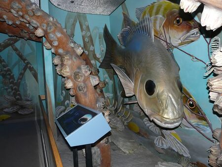 GAINESVILLE, FLORIDA-JUNE 23, 2019: This exhibit of a Florida estuary at the Museum of Natural History features sculptures of underwater plants, fish, and invertebrates that are 12 times life size.