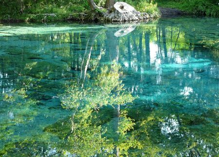 Beautiful reflections of trees with white bark in the clear water of a natural spring in northern Florida. Taken in the springtime. 写真素材