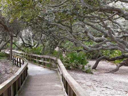 Cumberland Island, Georgia, Sea Camp boardwalk. Maritime forest Live Oaks between dunes and salt marsh lean away from the ocean due to wind and salt spray. 写真素材