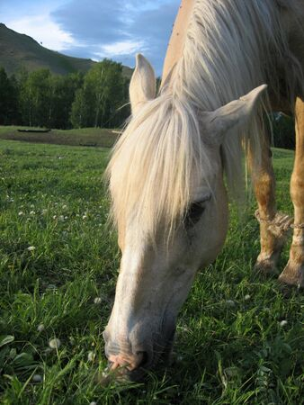 This photo of a horse has been made in mountains of Urals Mountains. photo