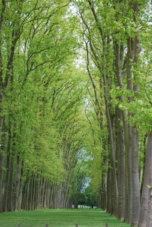 Alley in the Park of Versailles, France photo