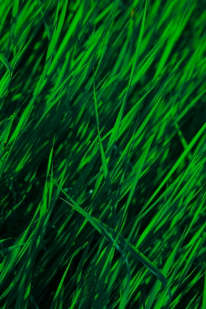 green grass on the field, macro view photo