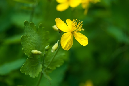 yellow flower in meadow with green grass photo