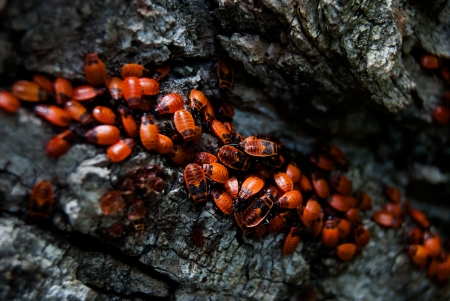 many red bugs on tree bark, close up photo