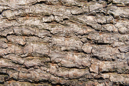 bark of walnut tree, macro, background texture Stock Photo - 21341722
