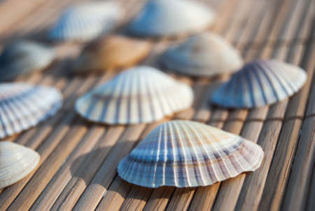 little seashells on wooden mat, close up photo