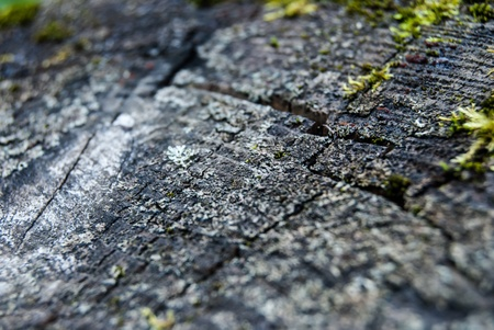 sawed wood with green moss texture close up photo