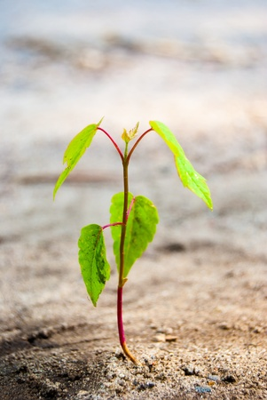 green sprout growing in dry ground, macro photo